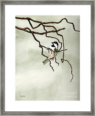 Black Capped Chickadee Framed Print by Antony Galbraith