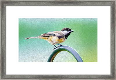 Framed Print featuring the mixed media Black-capped Chickadee Oil by Onyonet  Photo Studios