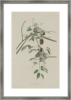 Black-capped Titmouse Framed Print by Dreyer Wildlife Print Collections
