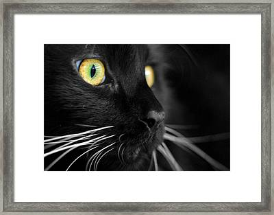 Black Cat 2 Framed Print