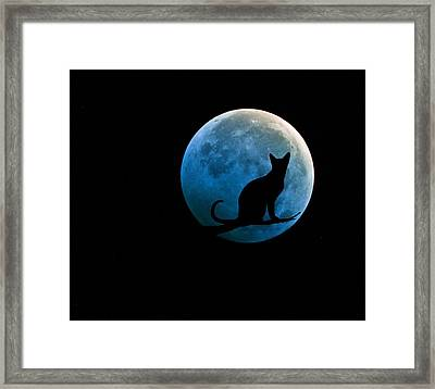 Black Cat And Blue Full Moon Framed Print by Marianna Mills