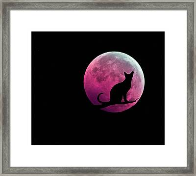 Black Cat And Pink Full Moon Framed Print