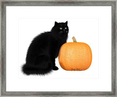 Black Cat And Pumpkin Framed Print by Corey Ford