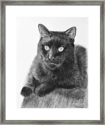 Black Cat Detailed Drawing Framed Print