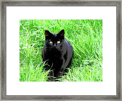 Black Cat In A Green Field Framed Print