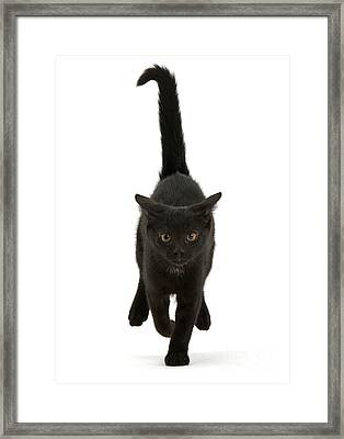 Black Cat On The Run Framed Print
