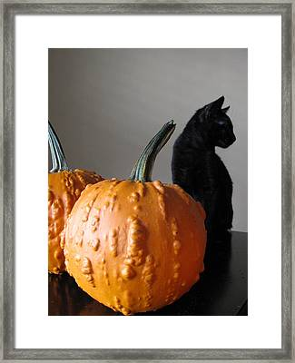 Black Cat Silhouette  Framed Print