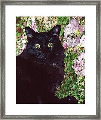 Black Cat Startled By A Bee Framed Print