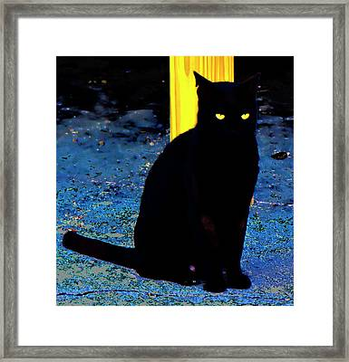 Black Cat Yellow Eyes Framed Print