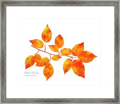 Black Cherry Pressed Leaf Art Framed Print by Christina Rollo