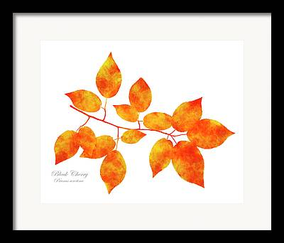 Pressed Leaves Framed Prints