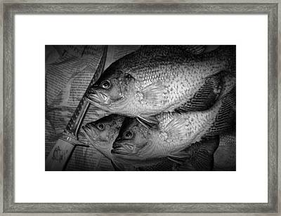 Black Crappie Panfish With Fish Filet Knife In Black And White Framed Print by Randall Nyhof