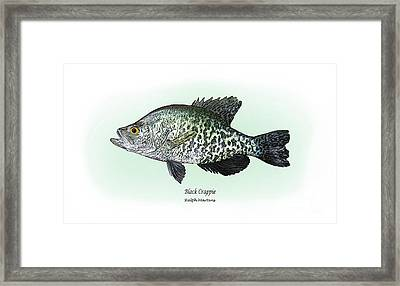 Black Crappie Framed Print