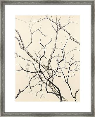Black Crested Titmouse Framed Print by Paul Illian