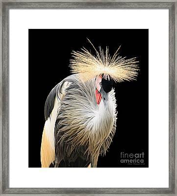 Black Crowned Crane Framed Print