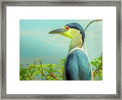 Black-crowned Night Heron Digital Art Framed Print