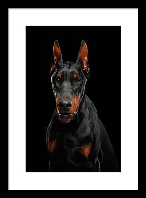 Doberman Framed Prints