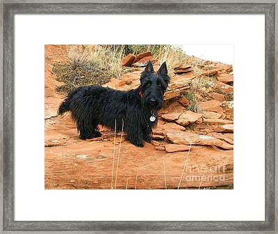 Black Dog Red Rock Framed Print by Michele Penner