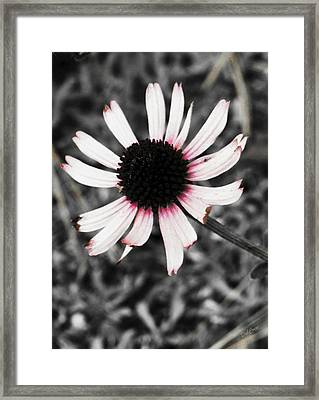 Framed Print featuring the photograph Black Eyed by Deborah  Crew-Johnson