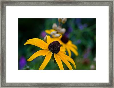 Framed Print featuring the photograph Black Eyed Susan Daisy by Gary Smith