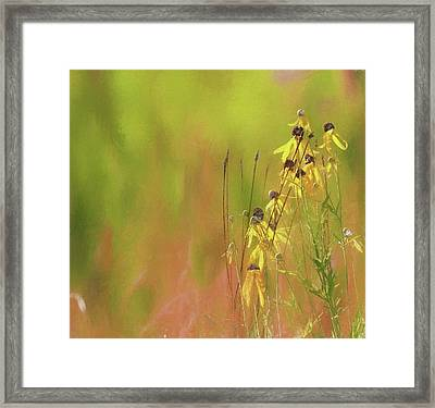 Black Eyed Susan Flowers Framed Print by Dan Sproul