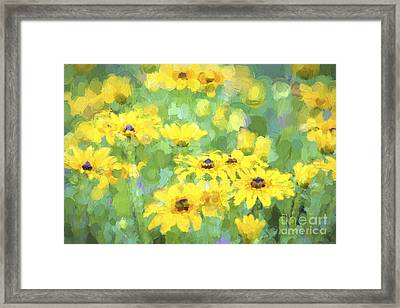 Black-eyed Susans Abstract Framed Print