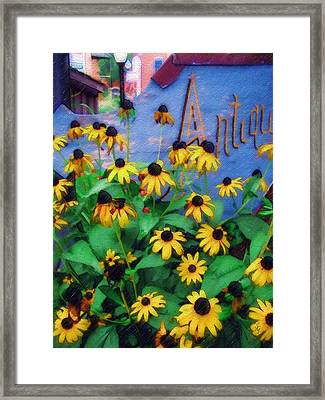 Black-eyed Susans At The Bag Factory Framed Print by Sandy MacGowan