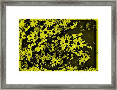 Black Eyed Susan's Framed Print by Bill Cannon