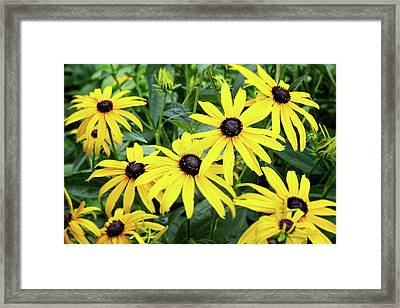 Black Eyed Susans- Fine Art Photograph By Linda Woods Framed Print by Linda Woods