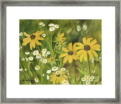 Black-eyed Susans In A Field Framed Print