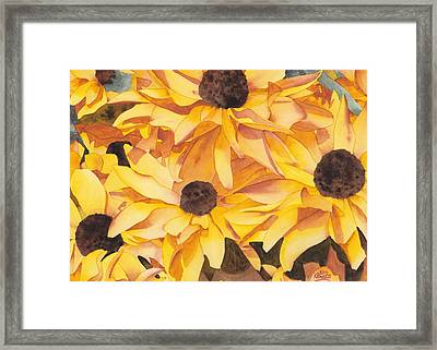 Black Eyed Susans Framed Print