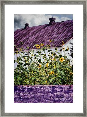 Framed Print featuring the photograph Black Eyed Susans by Polly Peacock