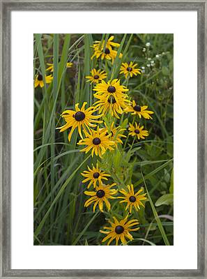 Black Eyes 0867 Framed Print
