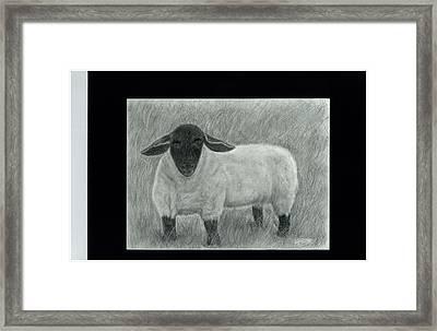 Black Face Sheep In Field Framed Print by Danielle McCoy