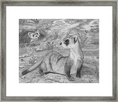 Black Footed Ferrets Framed Print by Cathleen Lengyel
