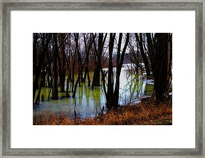 Black  Forest - Image  4598 Framed Print
