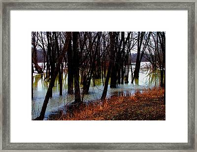 Black  Forest -  Image  4599 Framed Print