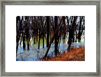 Black  Forest - Image 4605 Framed Print