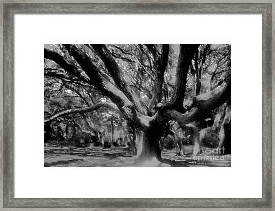 Black Forest Framed Print by David Lee Thompson