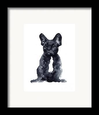 French Bull Dog Framed Prints