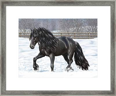 Black Friesian Horse In Snow Framed Print by Crista Forest