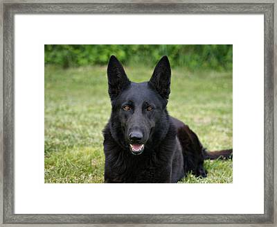 Black German Shepherd Dog II Framed Print