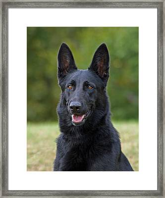 Black German Shepherd Dog Framed Print by Sandy Keeton