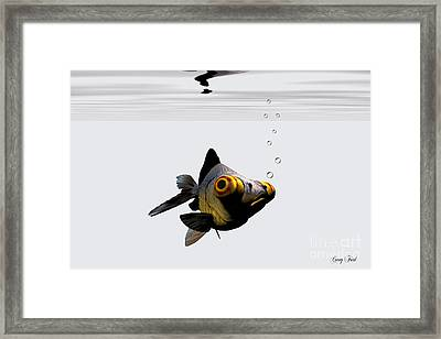 Black Goldfish Framed Print by Corey Ford