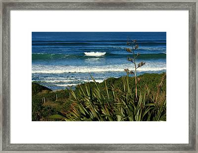 Black Head Beach Dunedin Framed Print