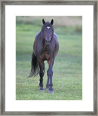Black Horse Framed Print by Glenn Vidal