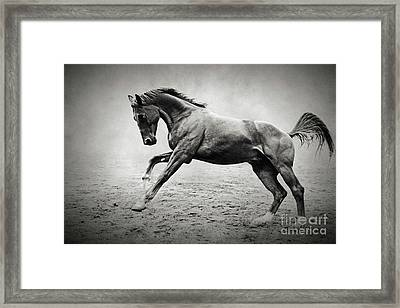 Black Horse In Dust Framed Print