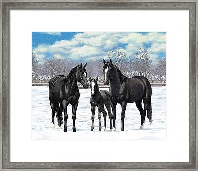 Black Horses In Winter Pasture Framed Print by Crista Forest