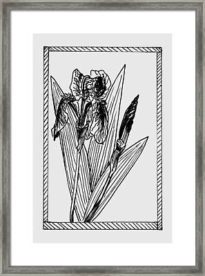 Black Iris On Transparent Background Framed Print