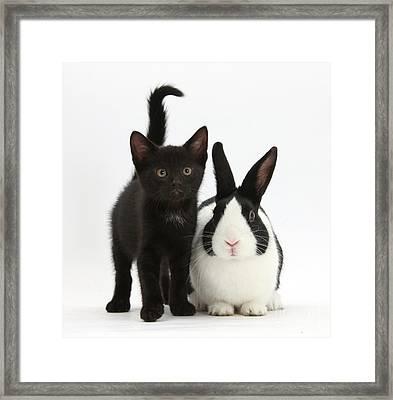 Black Kitten And Dutch Rabbit Framed Print by Mark Taylor